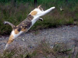 Comportement : pourquoi les chats nous rapportent-ils ce qu'ils chassent ?
