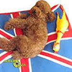 Voyager en Angleterre depuis la Belgique, la France ou la Suisse avec un animal de compagnie