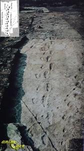 Empreintes fossiles, comme des étoiles au firmament des Ages