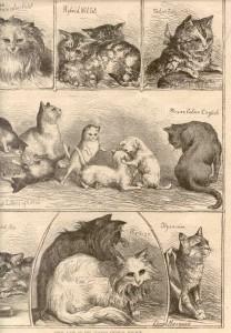 Le chat Persan, le raffinement et l'élégance en un seul chat