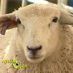 L'abattage de chiens errants autorisé dans l'Aube et en Haute Marne