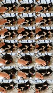 Comportement : l'agressivité du chat envers l'Homme durant les caresses ou les jeux (causes, symptômes et solutions)