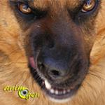 Peut-on vivre avec un animal agressif ?