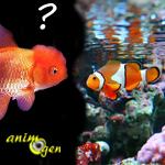 Aquariophilie : peut-on convertir un aquarium d'eau douce en bac récifal ?