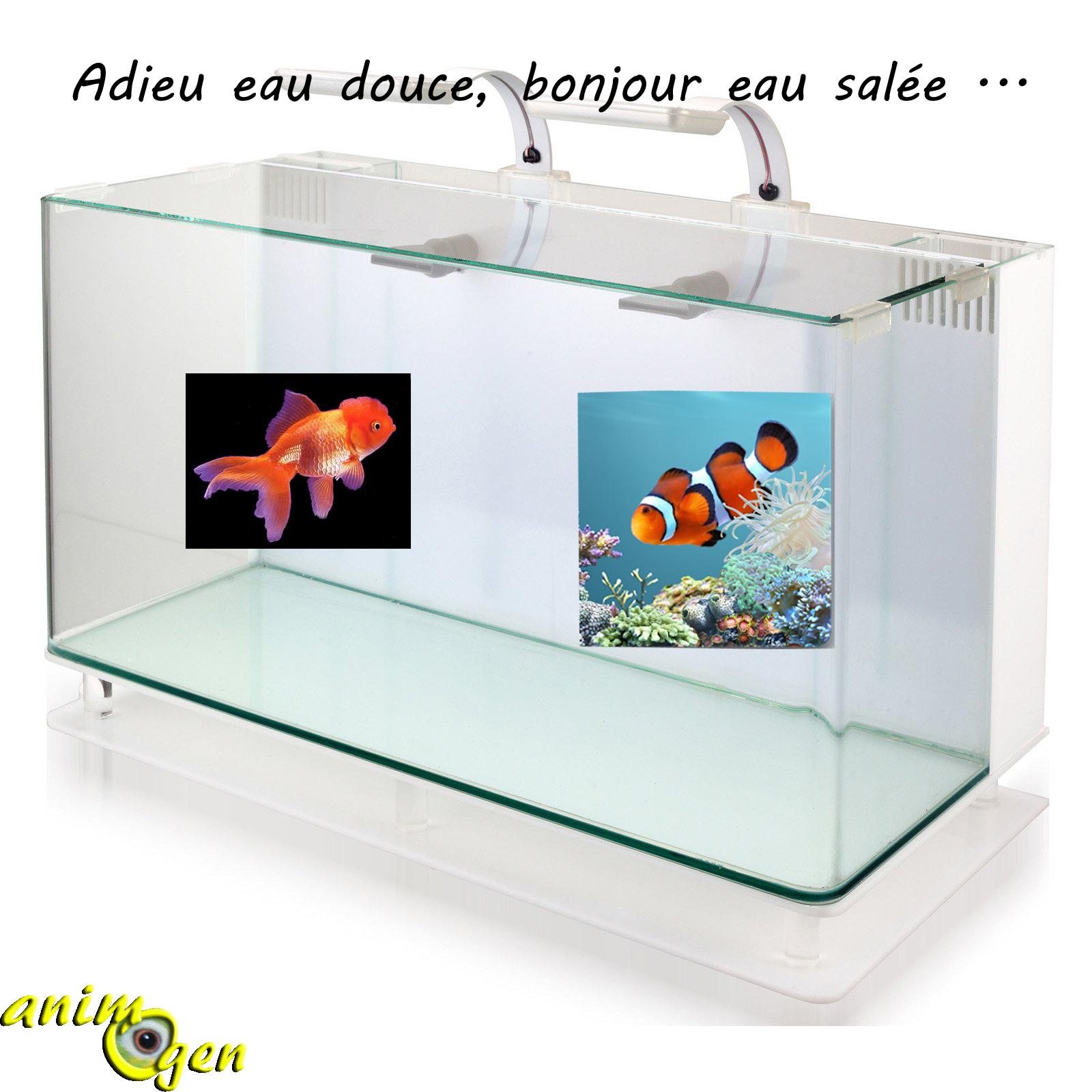 Aquariophilie convertir un aquarium d eau douce en bac for Aquarium bac