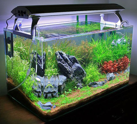 Aquariophilie convertir un aquarium d eau douce en bac for Decoration pour aquarium d eau douce