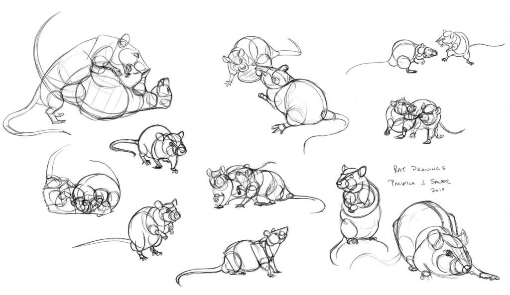 Apprenez à vos rats à jouer avec vous : le jeu de la bataille et la pirouette