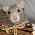 Santé : les bois toxiques et non toxiques pour les rongeurs et lapins de compagnie