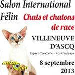 Bourse Féline à Villeneuve d'Ascq (59), le dimanche 08 septembre 2013