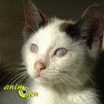 Santé : la cécité chez le chat, un mode de vie sur mesure
