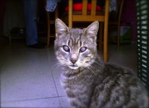 Sant la c cit chez le chat un mode de vie sur mesure - En fait de meuble possession vaut titre ...