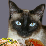 chat-recette-équilibrée-alimentation-repas-nourriture-maison-plats-félins-viande-légumes-féculents-faits-animal-animaux-compagnie-animogen