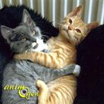 La stérilisation des chats mâles et femelles, âge et utilité