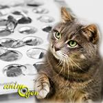 L'utilisation de la pilule contraceptive pour les chattes : effets, limites et risques