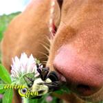 Santé : piqûres et morsures d'insectes chez le chien (symptômes et traitement)
