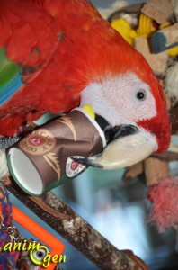 Jouet pour perroquet à fabriquer soi-même : le gobelet mille-feuille