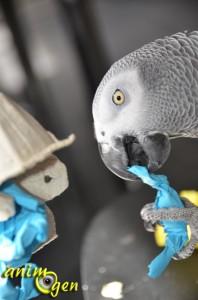 Jouet de foraging à fabriquer pour perruche et perroquet : coques en boîte à oeufs