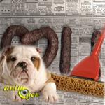 Trouble du comportement : la malpropreté chez le chien causes et solutions
