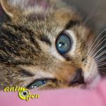 Comportement : les chats ont-ils une personnalité propre ?