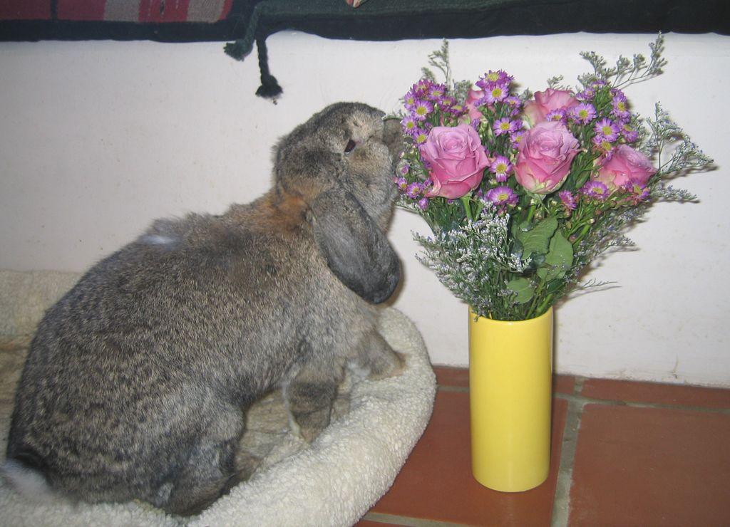 liste des plantes toxiques pour nos lapins de compagnie animogen. Black Bedroom Furniture Sets. Home Design Ideas