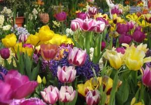 Liste des plantes toxiques pour nos lapins de compagnie