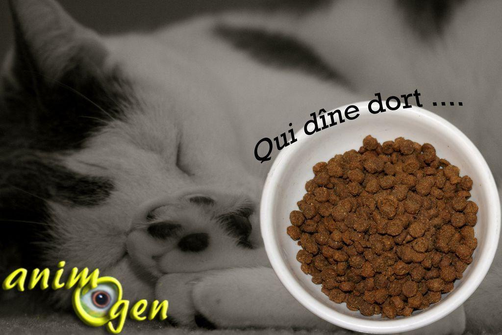 Les effets de l'alimentation sur le sommeil du chat
