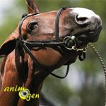 Trouble du comportement : les principaux tics chez le cheval, l'âne et le poney