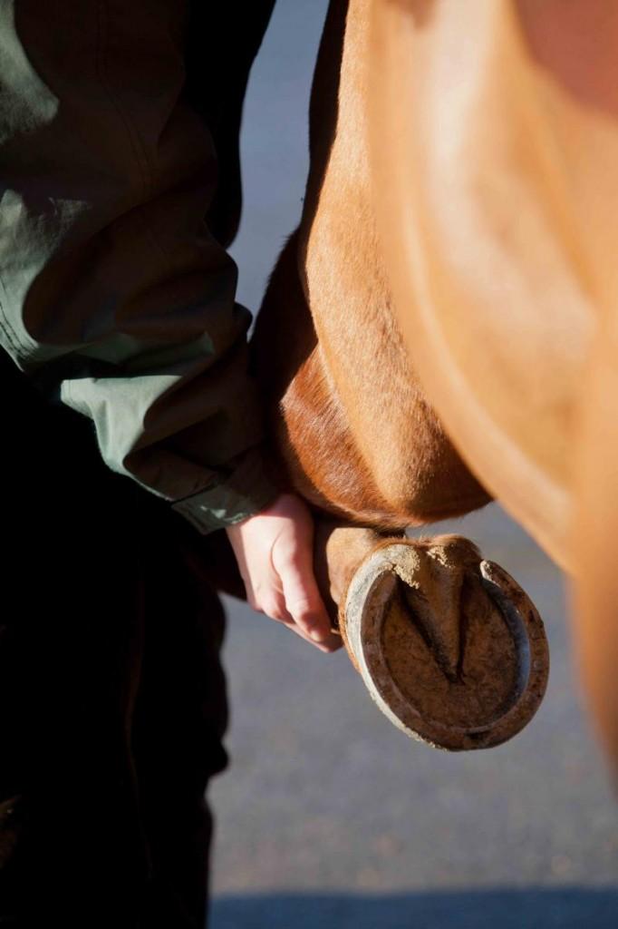 La visite vétérinaire, un impératif avant l'achat d'un cheval