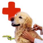 Santé : la maladie de Carré chez le chien (causes, symptômes, prévention, traitement)