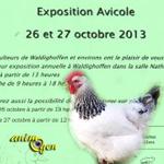 Exposition Avicole à Waldighoffen (68), du samedi 26 au dimanche 27 octobre 2013