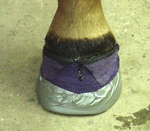 L'abcès du sabot chez le cheval (causes, symptômes, prévention, traitement)