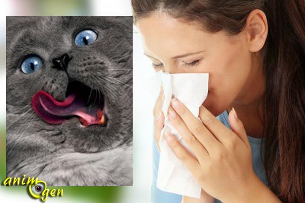 Santé : l'allergie aux poils de chats, réalité ou fiction ?