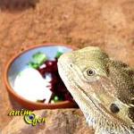 Santé : le manque d'appétit chez les reptiles (causes, symptômes, solutions)