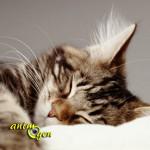 Comprendre et aménager le sommeil du chat
