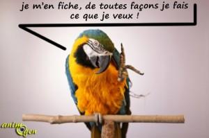 L'évolution des comportements du perroquet à travers sa croissance
