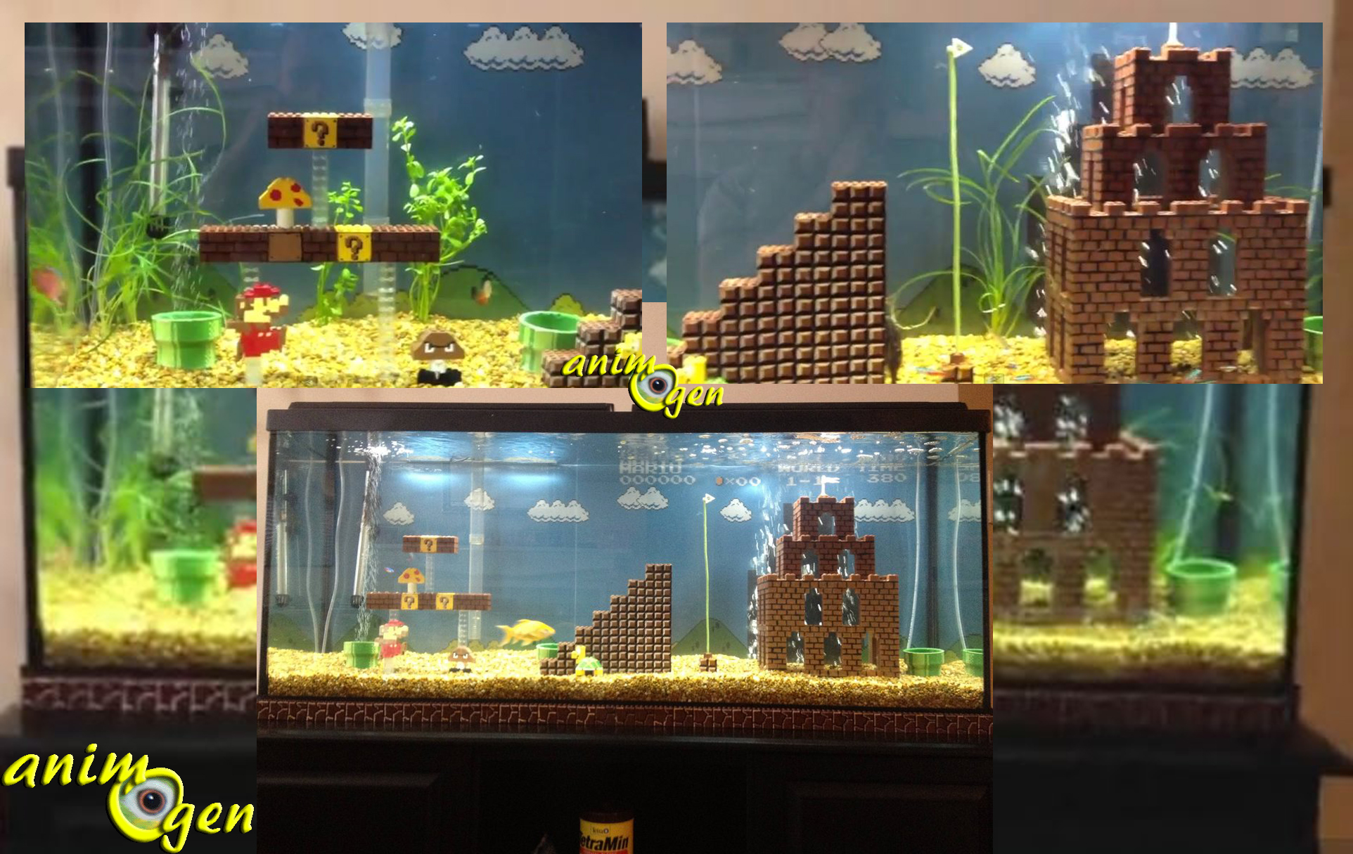 l univers de mario bros dans un aquarium pour les fans de jeux vid os animogen. Black Bedroom Furniture Sets. Home Design Ideas