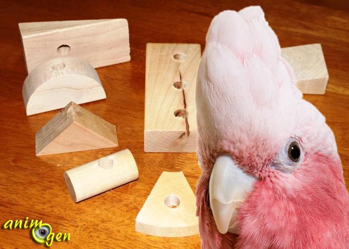 Jeux et accessoires : les perroquets ont-ils une préférence pour les jouets en bois dur ou en bois tendre ?