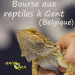 Bourse aux reptiles à Gent (Belgique), le dimanche 27 octobre 2013