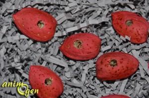 Fabriquez un jouet pour vos perroquets avec des noix et des amandes