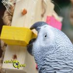 Jouet à fabriquer : tour de Babylone à fourager pour perroquets