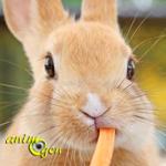 Pourquoi les lapins ne sont-ils pas des rongeurs ?