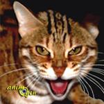 Le Mokave, ajoutez une dimension sauvage à votre chat