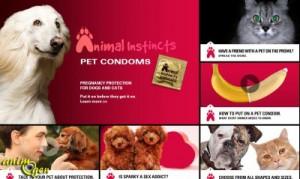 Santé : les préservatifs pour chiens et chats, une méthode révolutionnaire de contraception