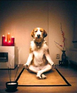 Les animaux sont-ils un modèle d'équilibre psychologique ?