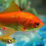Bourse aux poissons à Morhange (57), le dimanche 20 octobre 2013