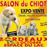 Salon du chiot bordeaux 33 du samedi 05 au dimanche for Salon du chiot marseille