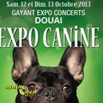 Expo Canine à Douai (59), du samedi 12 au dimanche 13 octobre 2013