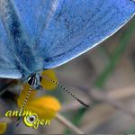 L'impact biologique de la catastrophe nucléaire de Fukushima sur les papillons