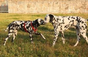 Comportement : mâle ou femelle, quel sexe choisir lors de l'adoption d'un chien ?