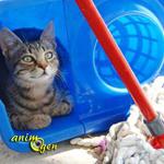 Comment éliminer l'urine de chat et son odeur ?